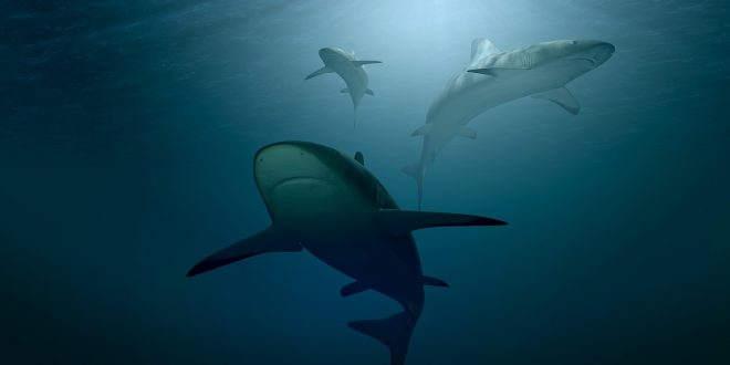 علم الأحياء البحرية